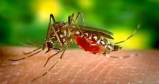 How to Prevent Zika Virus: 8 Safety Tips to Protection